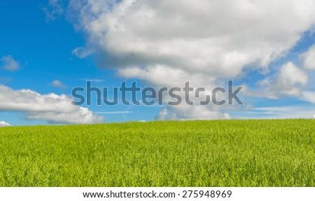 Summer scene. Oats, sky and cloud - stock photo