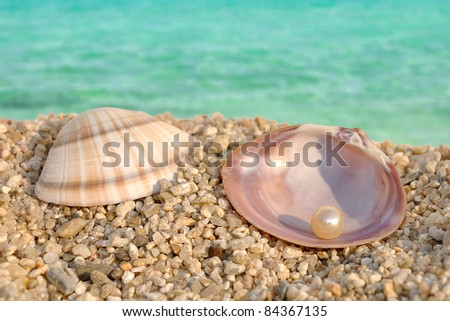Summer scene - sea shell and the pearl - stock photo