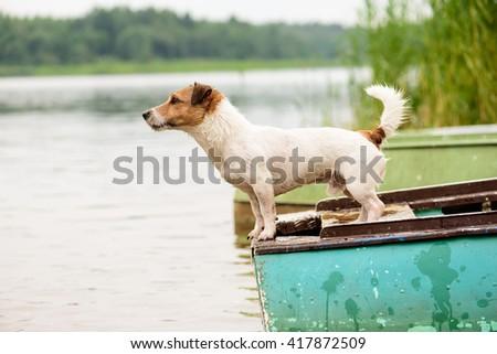 Summer scene: wet dog standing on river boat - stock photo