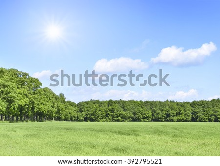 Summer scene with sun, green meadow and an alley of trees. Forest and green field with blue sky and bright sun. Nature background with copy space. - stock photo