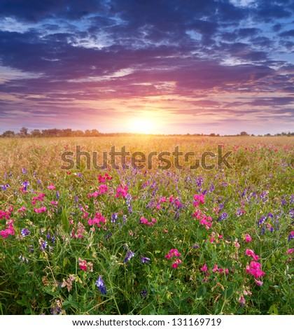 Summer scene with sunset on meadow - stock photo