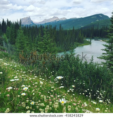 Summer scenery. White wild flowers. Mountain landscape scene. Instagram effects. - stock photo