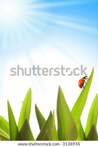Summer scenic - stock photo