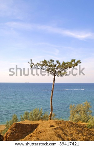Summer sea landscape with pine-tree