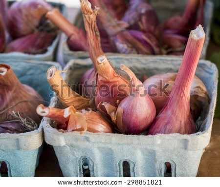 Summer shallots ready for sale at local farm market. - stock photo