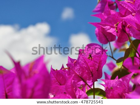 Summer sky nature background with purple flowers