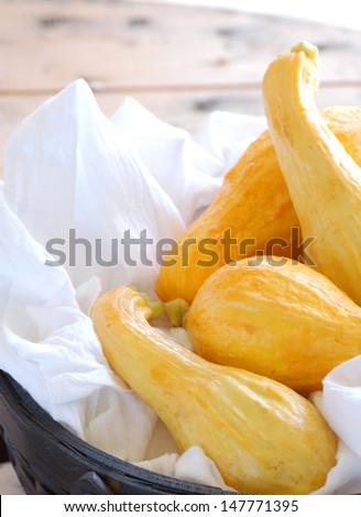 Summer Squash in Basket with Copy Space  - stock photo