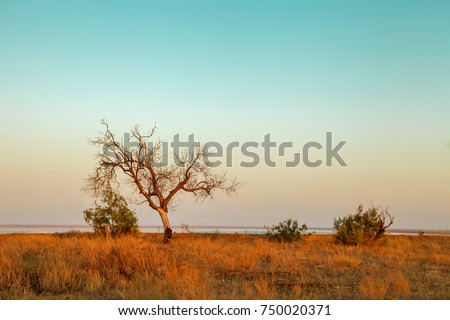 Summer. Steppe. Sunset. The dry grass and the tree.