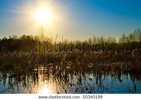 summer sun over forest lake - stock photo