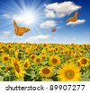Summer sun over the sunflower field with butterflies - stock photo
