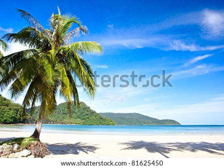 Summer sunny beach with tropical palm tres under blue sky. Exotic nature scene. - stock photo