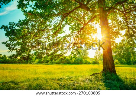 Summer Sunny Forest Trees And Green Grass. Nature Wood Sunlight Background. Instant Toned Image - stock photo