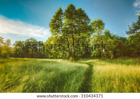 Summer Sunny Forest Trees, Green Grass, Lane, Path, Pathway. Nature Wood Sunlight Background. Instant Toned Image - stock photo