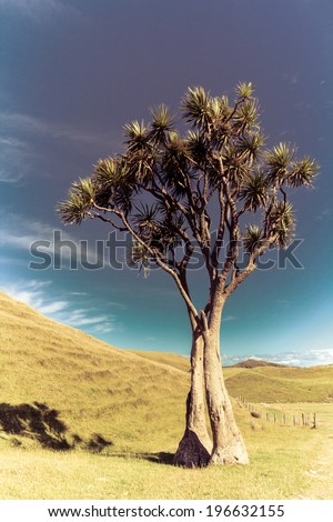 summer sunny landscape with a cabbage tree - stock photo