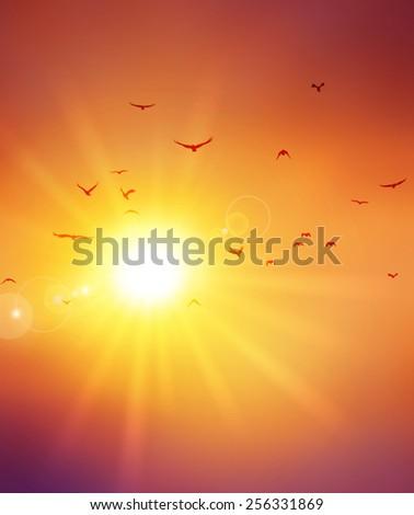 Summer sunset. Birds flight ahead the setting sun - stock photo