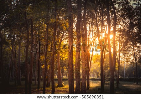 summer sunset in the forest in Thailand