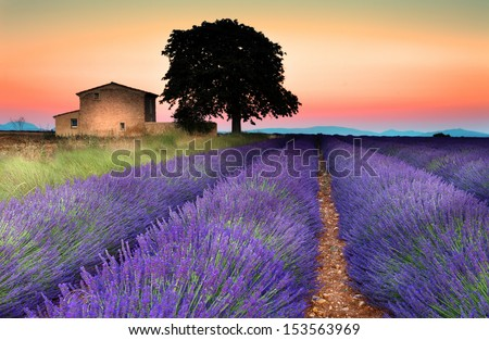 Summer sunset in Valensole.Provence,France. - stock photo