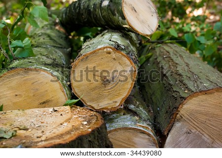 Summer timber cutting - stock photo
