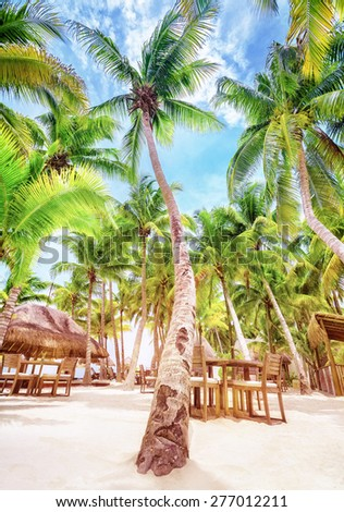 Summer time cafe on beautiful tropical beach, fresh big green palm trees, luxury beach resort in Mexico, North America - stock photo