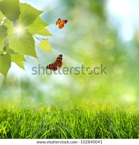 summer time. optimistic backgrounds with flying butterfly - stock photo