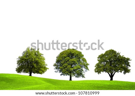 Summer tree - stock photo