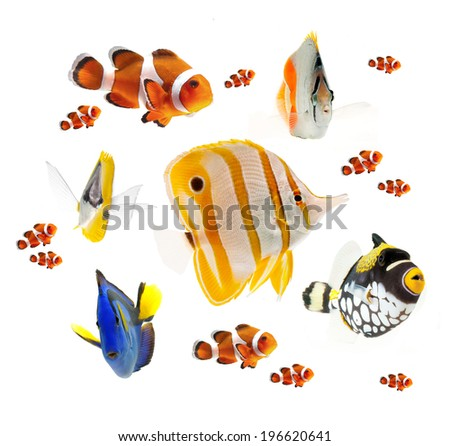 summer tropical reef fish collection isolated on white background - stock photo