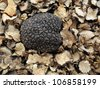 summer truffle (tuber aestivum) on a bed of slices - stock photo