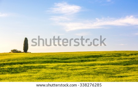 Summer tuscan landscape with cypress tree in the background