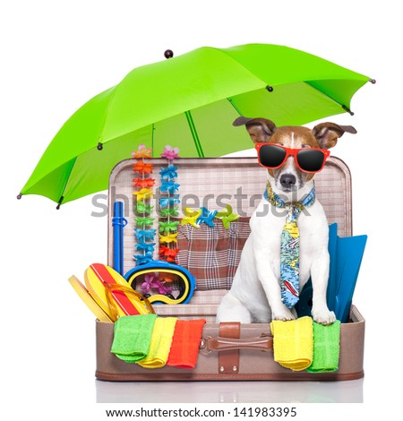 summer vacation dog in bag full of holiday items - stock photo