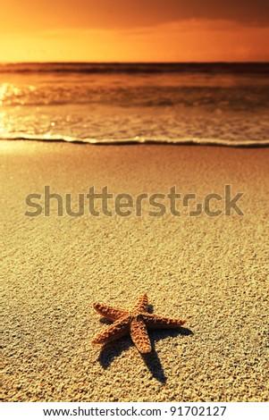 Summer vacations - starfish on sunset sea sand beach - stock photo