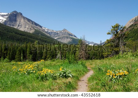 Summer view of forests and mountain in waterton lakes national park, alberta, canada - stock photo