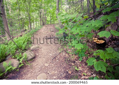 Summer view of path in woods and fungus on decayed log. - stock photo