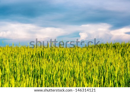 Summer view of the green field