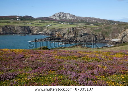Summer views with heather and gorse out in full flower from The Range Isle of Anglesey