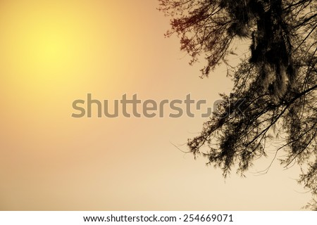 Summer vintage background. beach Pine  tree and sky. Vintage filter. - stock photo