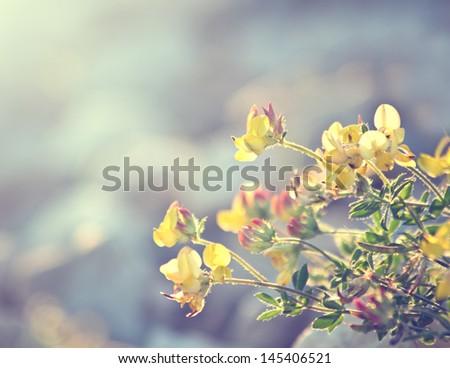 summer vintage beautiful flowers on sunrise - stock photo