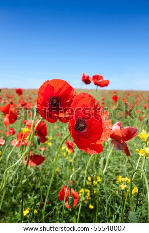Summer wild flowers at sunny beautiful day - stock photo