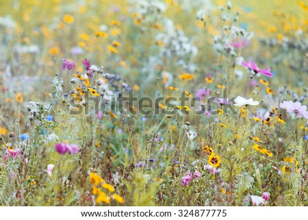 Summer WIldflower Meadow, Vintage Colours - stock photo