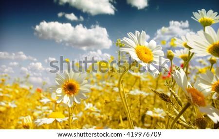 Summer wildflowers - stock photo
