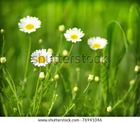 Summer wildflowers - stock photo