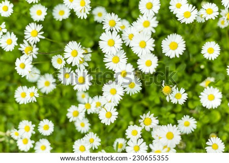 Summer wildflowers background/Wildflowers background texture - stock photo