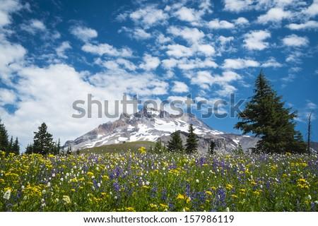 Summer wildflowers beneath the blue sky, Mt. hood, Oregon Cascades - stock photo
