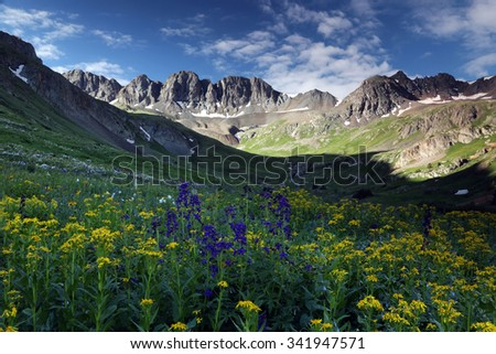 Summer wildflowers high up in the Colorado Rocky Mountains near Lake City, Co.  American Basin is off Cinnamon Pass Road on the Alpine Loop Scenic Byway in the San Juan Mountains. - stock photo