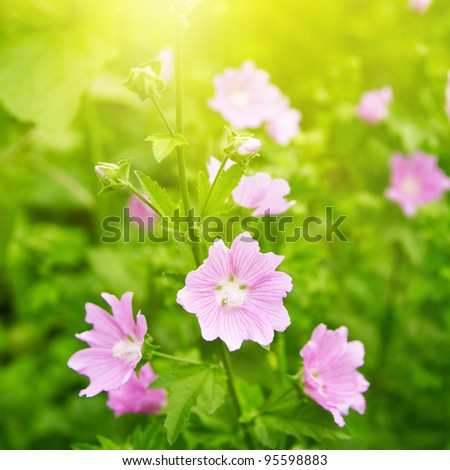 Summer wildflowers in the sunlight. - stock photo