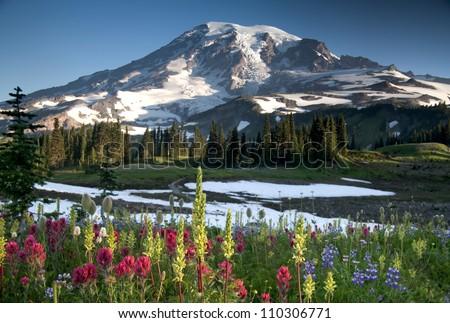 Summer Wildflowers, Mazama Ridge Mt. Rainier National Park - stock photo