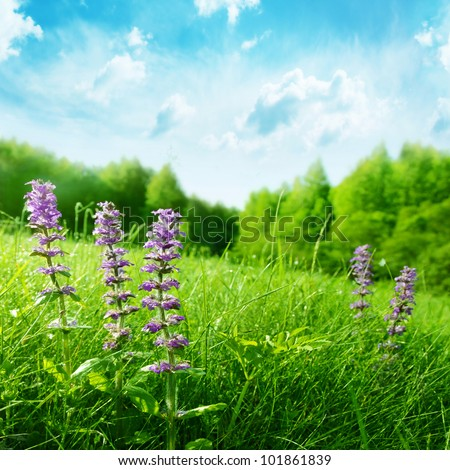 Summer wildflowers on a hill and blue sky with clouds. - stock photo