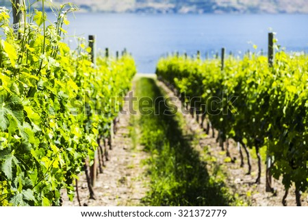Summer Winery View  - stock photo