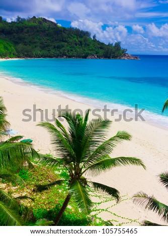 Summertime Jungle Landscape - stock photo
