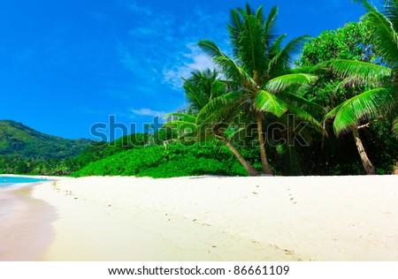 Summertime Landscape Palms - stock photo