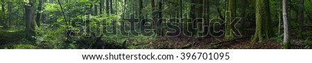 Summertime old rich stand of Bialowieza Forest in morning,Bialowieza Forest,Poland,Europe - stock photo